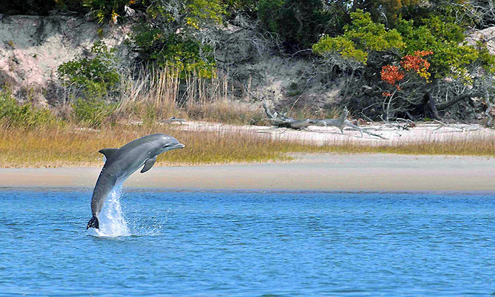 St. Augustine Eco Tours